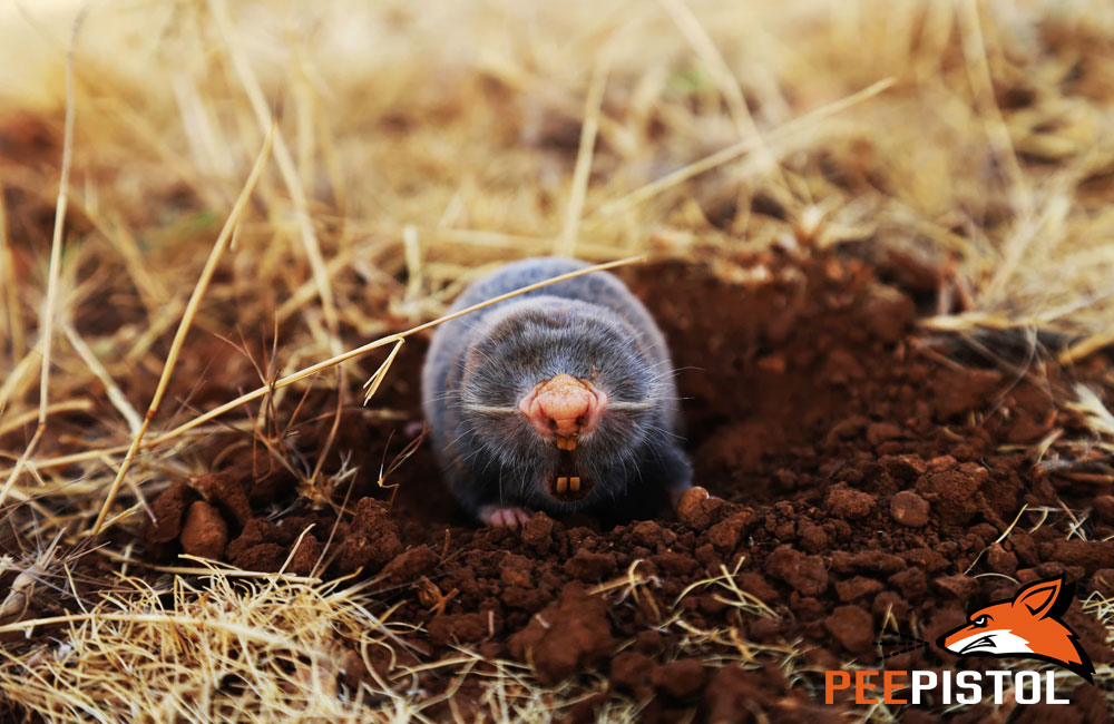 Natural Pest Control for Your Lawn and Garden